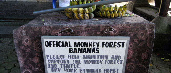 proxy - Sacred Monkey Forest Sanctuary - Travel and Tours